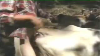 White cow suck dick bestiality, and then he fucked her