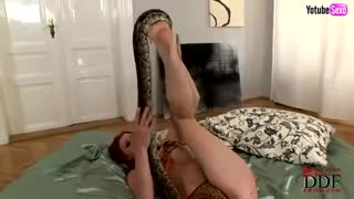 Busty redhead bitch boa tongue tickles hairy pussy