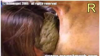 Scat collection: Japanese animal sex, in which the cow shit on the face of a young Japanese woman