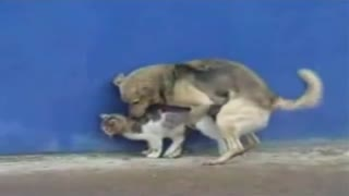 On the street a dog Fucks a cat-best of zoo sex with animals