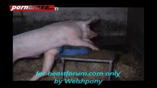 Fickt schwein Hausschwein