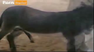 Sex zoo with a donkey on camera: ass sucking himself dick